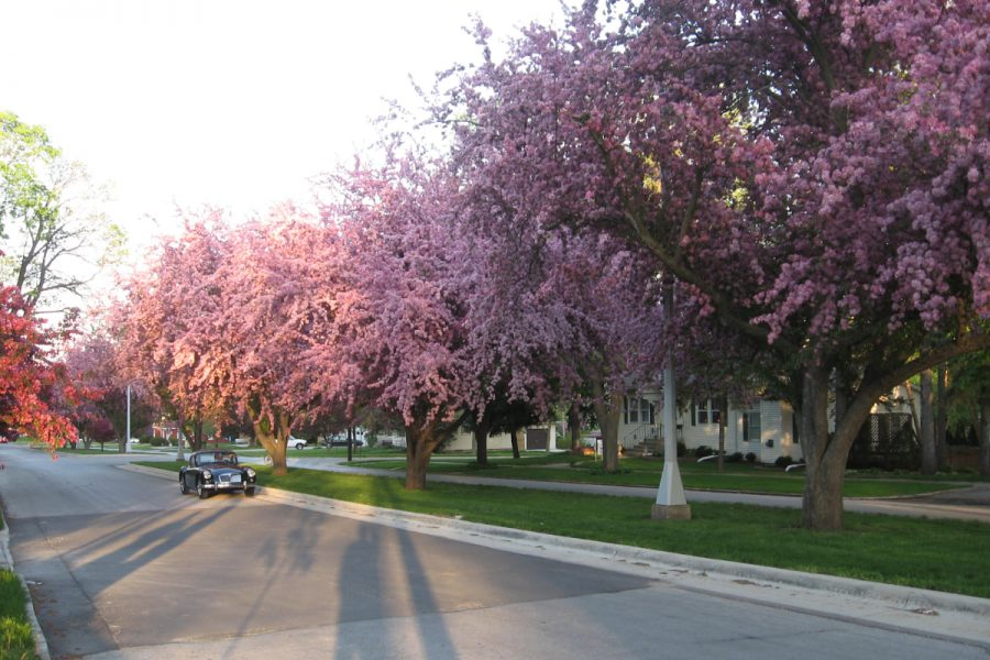 Know About The Landscape Of Seerley Boulevard-Cedar Falls